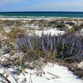 30A-Florida-State-Park