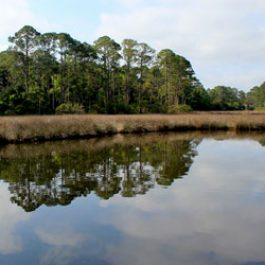point-washinton-bayou-bay