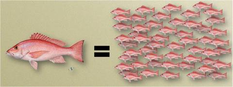 041714-Red_snapper_comparison_image